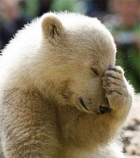 facepalm-bear